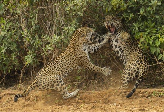 برترین عکس های حیات وحش سال 2013