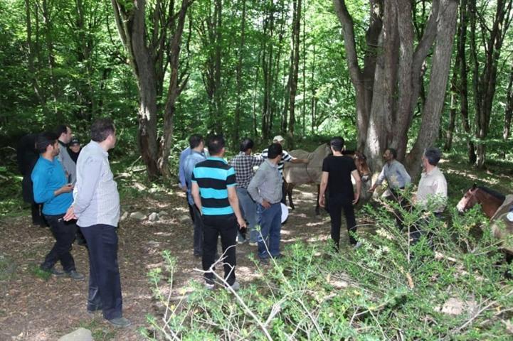 جنگل های هیرکانی، دومین میراث جهانی مازندران