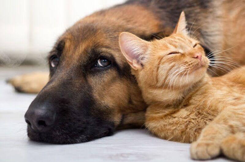 خبرنگاران اصول بهداشتی برای نگهداری حیوانات خانگی رعایت شود